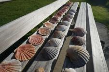 Katru reizi dodoties uz pludmali, sakām sev - nevienu gliemežvāku! Tomēr nespējam paiet tiem garām... :D