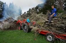 Milzu ugunskurā tiek nosvilināti desmitiem vecie olīvkoki, kurus ar traktora palīdzību izrāvām ar visām saknēm.