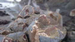 Moreaki Boulders. Daži no tiem sašķēlušies gabalos un skatam atklājies brīnišķīgs raksts akmeņu iekšienē.