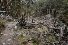 Nokāpienā uz Iris Burn Hut apkārt redzama postaža - kūstošais sniegs un pārplūstošie strauti mežus šeit nopļauj kā sērkociņus...