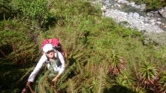 Kāpjam pa taisno kalnā, turoties pie papardēm un citiem lakstiem. Stāvums vietām tuvu vertikālam. :)